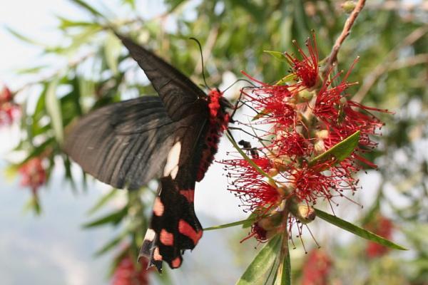 Бабочка и муравей (оцените размер)